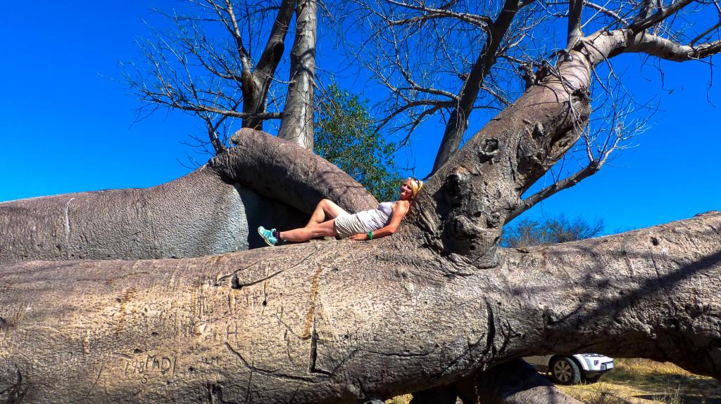 die ältesten Bäume Namibias