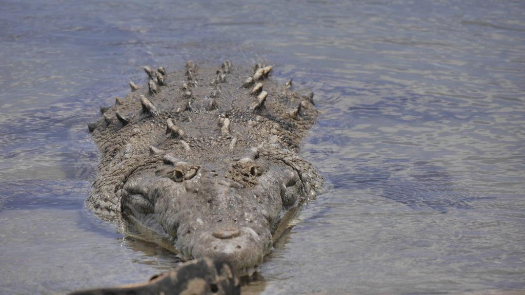 nachdem was her vor wenigen Tagen passiert ist , finde ich es makaber einen Schuh vor dieses Krokodil zu plazieren