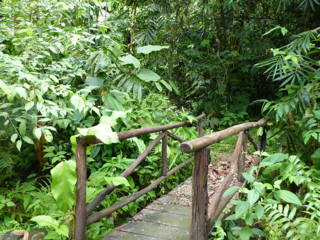 Eingang in den Regenwald