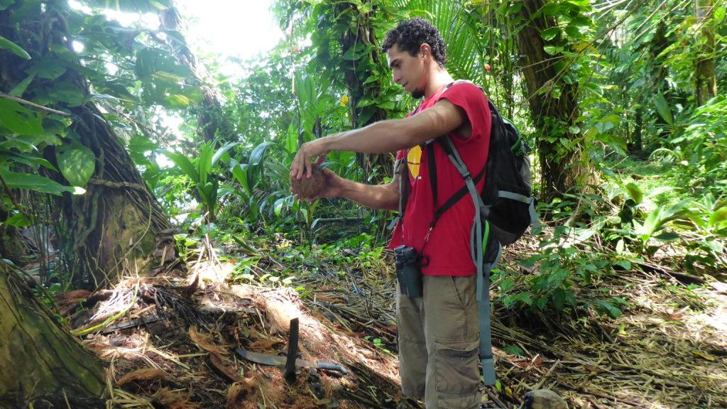 Ely öffnet für uns eine Kokosnuss