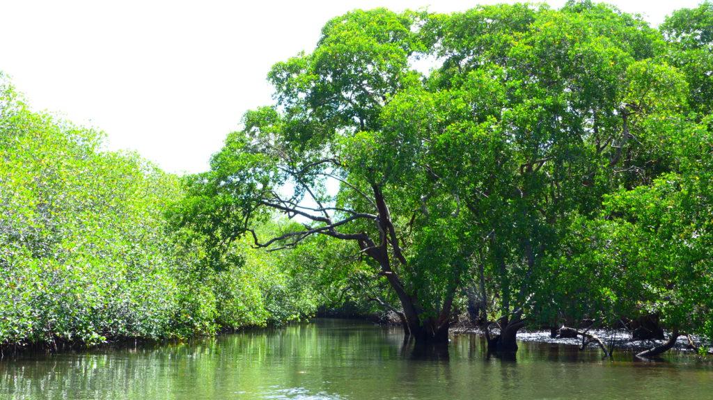 Bootsfahrt durch den Mangrovenwald