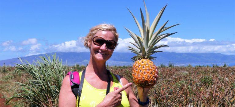 Die Ananas Insel Mauí