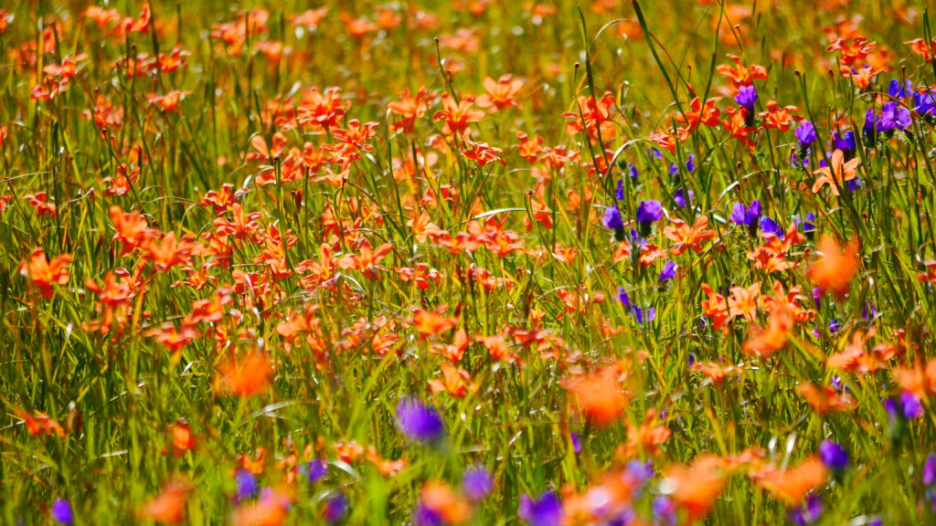 und natürlich Blumen überall