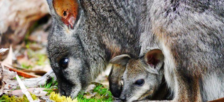 Kangaroo Island#1.Tag#ein guter Anfang#