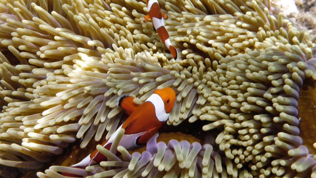 ich habe auch Nemo gefunden