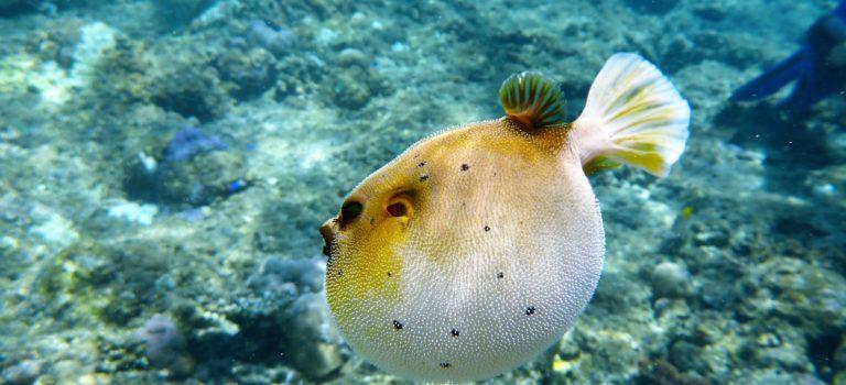 #zauberhafte Unterwasserwelt#Menjangan Island#