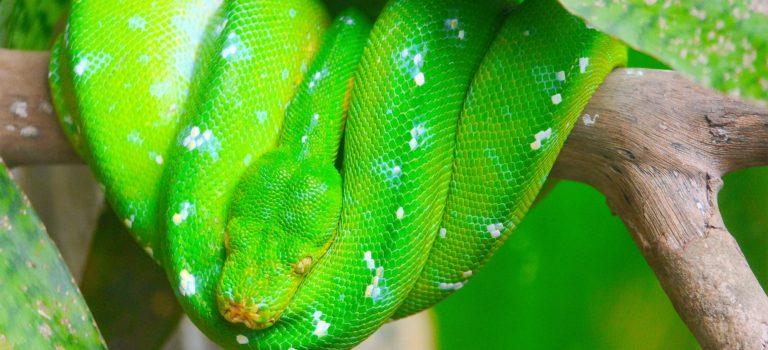 #Von bunten Vögeln, Schlangen und mehr#