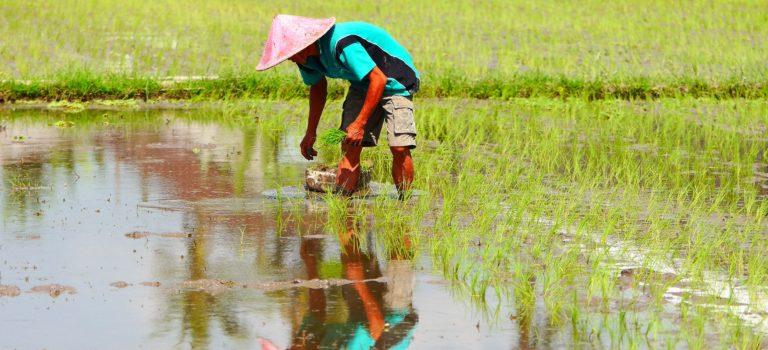 Hotel und Umgebung#Reisfelder#nette Begegnungen