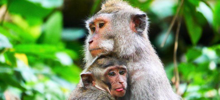 #Der Affenwald von Ubud#