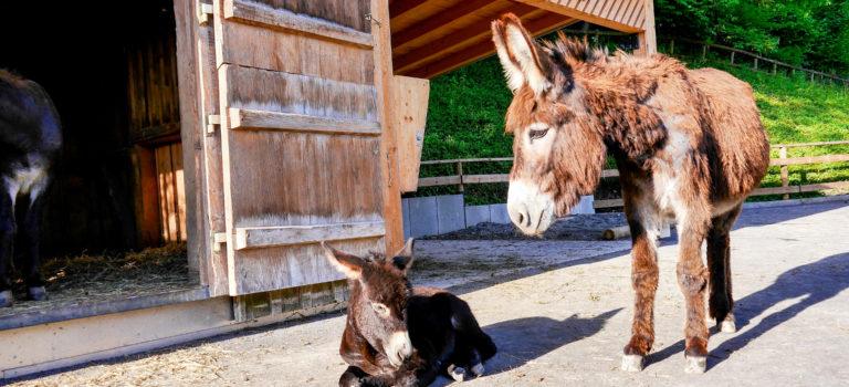 #Nachwuchs im Zoo#Doppelmayr Tiergarten#