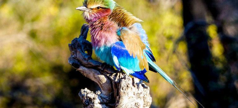 Bezaubernde Tierwelt Afrikas