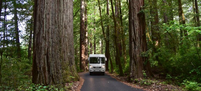 Von Mendocino zu den  Humbold Redwoods