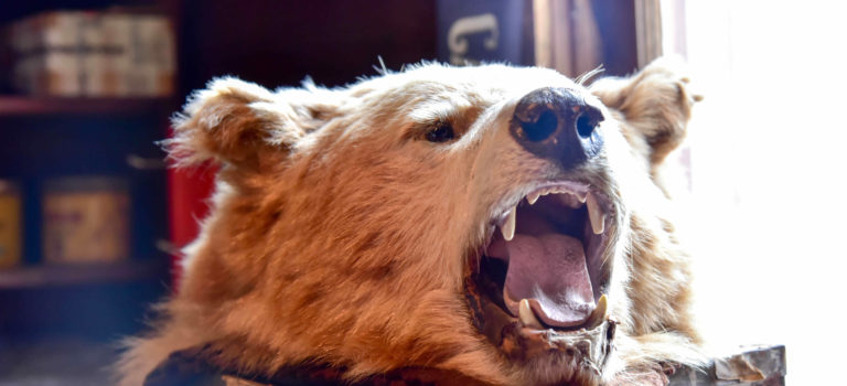 Hilfe – ein Bär! Was mache ich wenn ich Meister Petz  in freier Wildbahn  begegne?