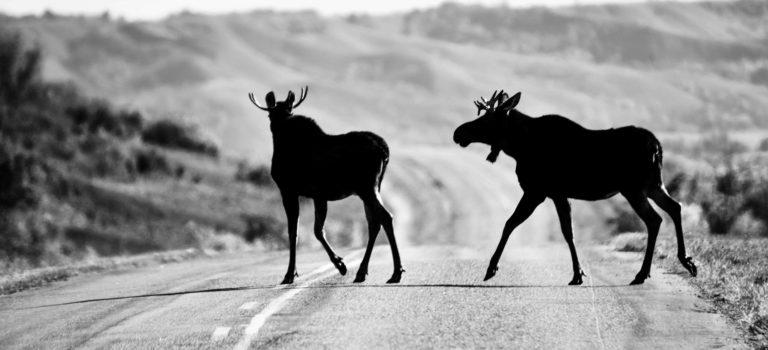 Auf einsamen Strassen von Saskatchewan nach Manitoba