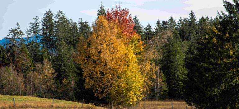 So schön ist der Herbst in Vorarlberg